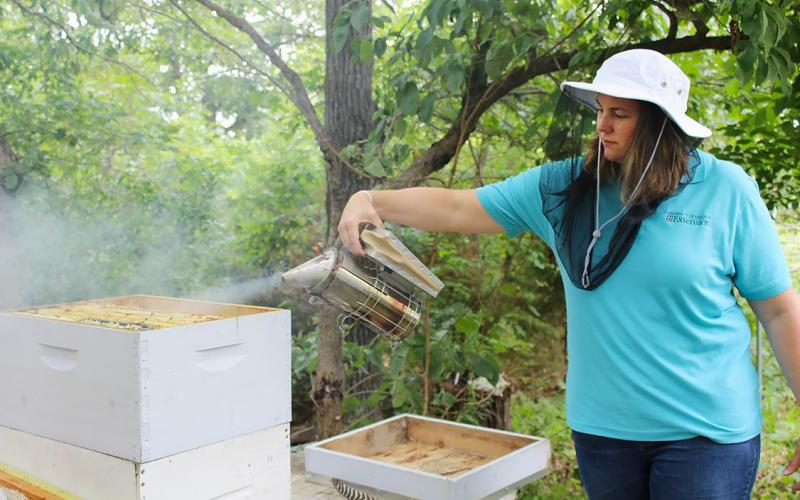 University of Missouri Extension specialist Joni Harper smokes one of Terry Mooney's beehives. Mooney is one of more than 800 Missourians who have taken beekeeping classes through MU Extension. Credit: Photo by Linda Geist.