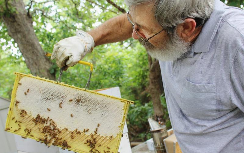 Beekeeper Terry Mooney of Versailles, MO, checks a beehive at his home. Mooney took a beginning and an advanced beekeeping class through University of Missouri Extension.Credit: Photo by Linda Geist.